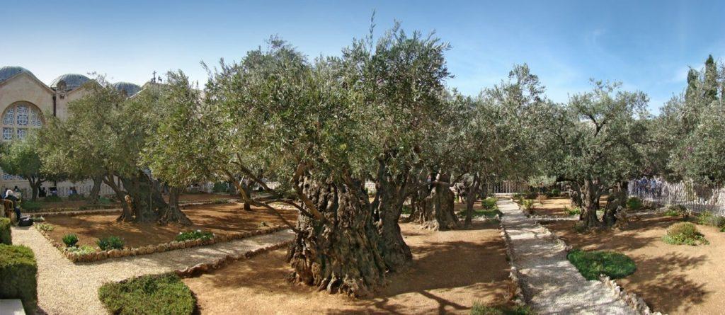 Jardim do Getsemani