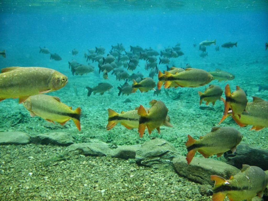 Aquario natural bonito